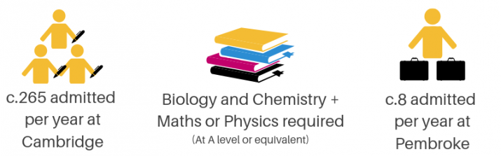 Medicine infographic - c. 265 admitted per year at Cambridge, Biology and Chemistry plus Maths or Physics A Levels or equivalent required, c. 8 admitted per year at Pembroke
