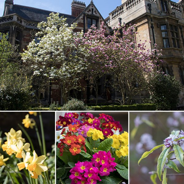 pembroke college cambridge gardens